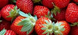 Todavía puedes disfrutar de las fresas