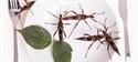 Los insectos como alternativa a la carne