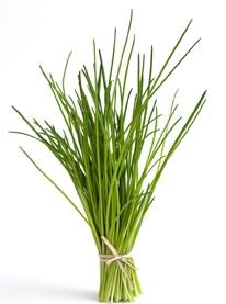 Diez hierbas arom ticas para plantar y cocinar ocu - Plantar hierbas aromaticas ...